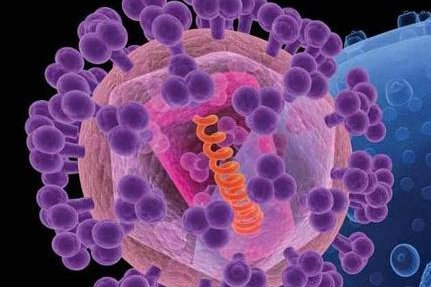 An artist's rendition of HIV, the knobs in purple covering the virus are sugar-protein molecules, including gp120, that shield the rest of the virus shown in pink.Photo courtesy National Cancer Institute