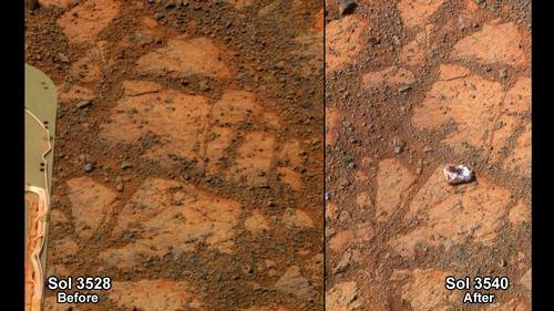 The mysterious rock recently photographed by NASA's Mars rover is a mushroom-like fungus, according to a California scientist suing NASA for not further investigating the possibility of life on Mars. (NASA)