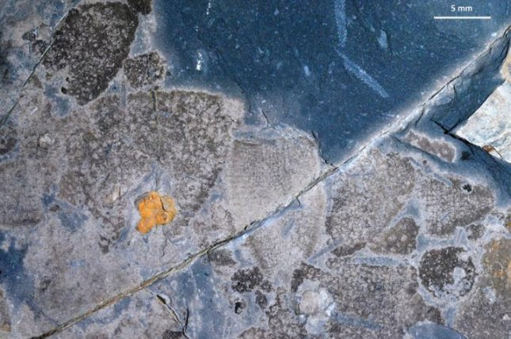 Excavation reveals sponge dominance in wake of end-Ordovician crisis