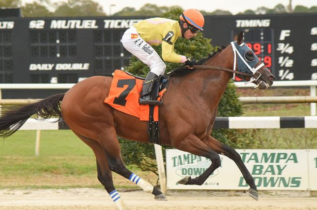 World of Trouble cruises to an easy win in Saturday's Pasco Stakes at Tampa Bay Downs. Photo courtesy of Tampa Bay Downs