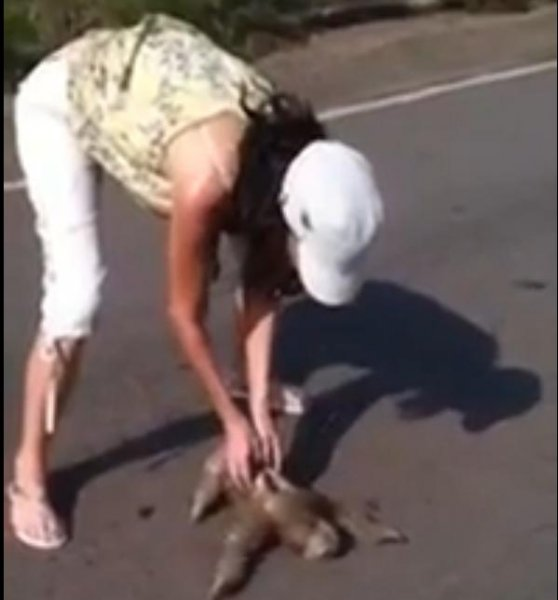 A woman works to save a sloth found trying to cross a stretch of Brazilian road. JukinMedia video screenshot