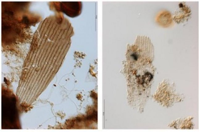 Researchers found evidence of primitive butterfly and moth wings among ancient pond scum. Photo by Bass van de Schootbrugge/Utrecht University
