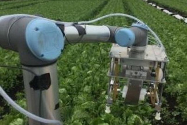 The Vegebot can identify iceberg lettuce heads that are ready to pick and make a precise cut without damaging the crop. Photo by University of Cambridge