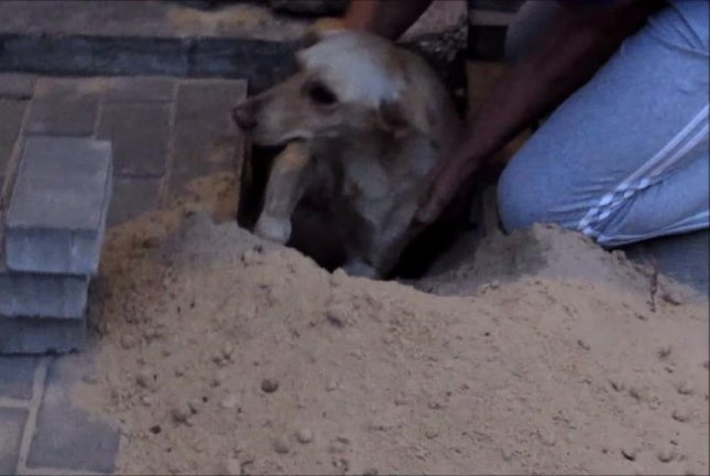 Residents in Rostov, Russia, pulled up a brick walkway to rescue trapped dog Belka, or Squirrel. Vadim Rustam/YouTube video screenshot