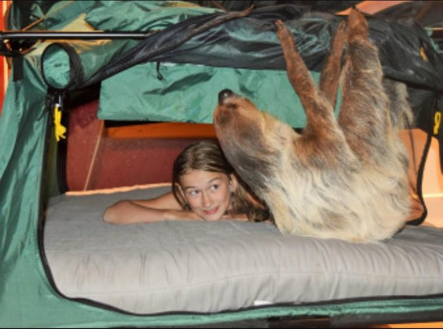 An Oregon wildlife center is offering Sloth Sleepover events where guests can feed and interact with the animals. Photo by the Zoological Wildlife Conservation Center and the Sloth Captive Husbandry Center