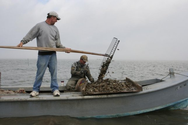 Oyster harvesters pull in a bounty in the waters of Florida's Apalachicola Bay in 2006. Since then, the oyster industry on Florida's Gulf Coast has been decimated by a variety of factors. Photo courtesy of Florida Fish and Wildlife/Flickr