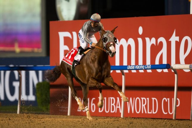 California Chrome, with Victor Espinoza up, romps in the Dubai World Cup on Saturday despite a bad post position and a slipping saddle. Photo courtesy Neville Hopwood/DRC