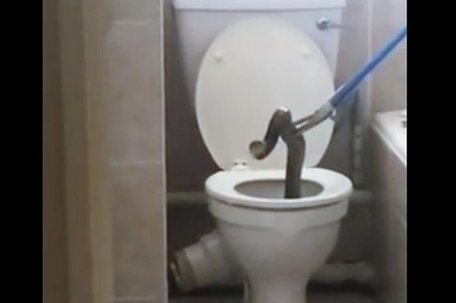 A snake catcher attempts to remove a cobra from a toilet bowl in a Pretoria, South Africa, apartment. Screenshot: Anton Meijer/YouTube
