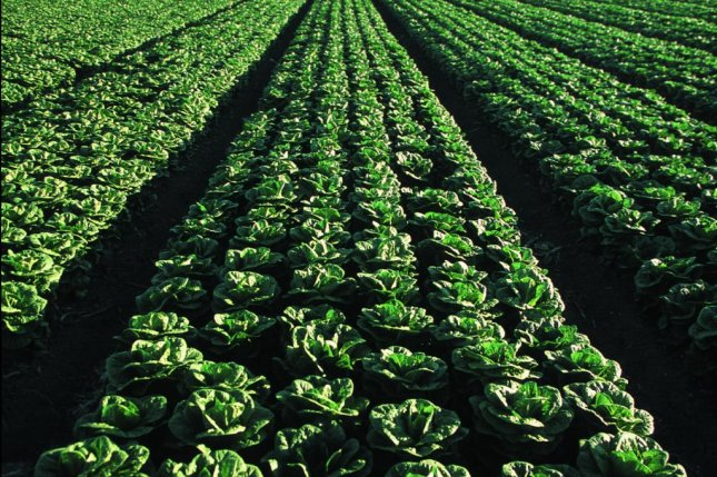 The Food and Drug Administration will begin testing romaine lettuce this year following multiple E. coli outbreaks that have made hundreds sick. Photo courtesy of U.S. Department of Agriculture Natural Resources Conservation Service
