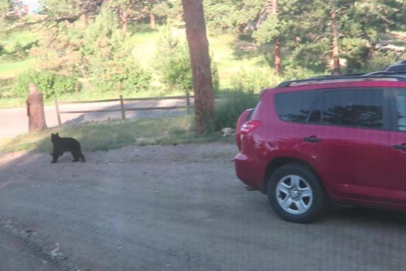 watch black bear destroys interior of colorado vehicle. Black Bedroom Furniture Sets. Home Design Ideas