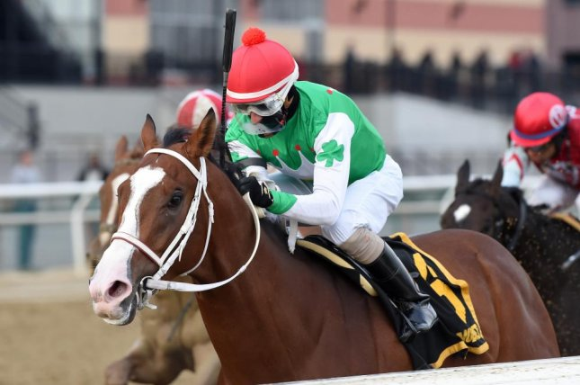 Maximus Mischief, seen winning the Remson Stakes on a cold day at Aqueduct, has fled to Florida where he is the favorite for Saturday's Holy Bull Stakes at Gulfstream Park. Photo courtesy of Chelsea Durand/NYRA