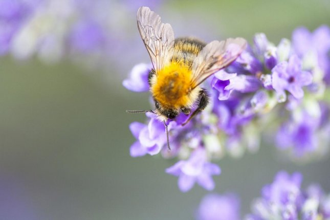 Urban settings provide more robust pollination services, new research suggests. Photo by Max Pixel/CC