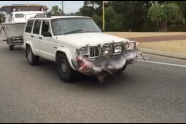 This Jeep with a tiger shark lashed to the front grill was spotted in Safety Bay, Australia. Julie Wright/Facebook video screenshot