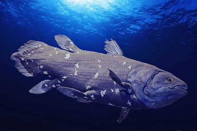 Scientists have previously referred to the African coelacanth fish as a living fossil because it looks much like its relatives from 65 million years ago. Photo by Zoo Firma/Wikimedia Commons