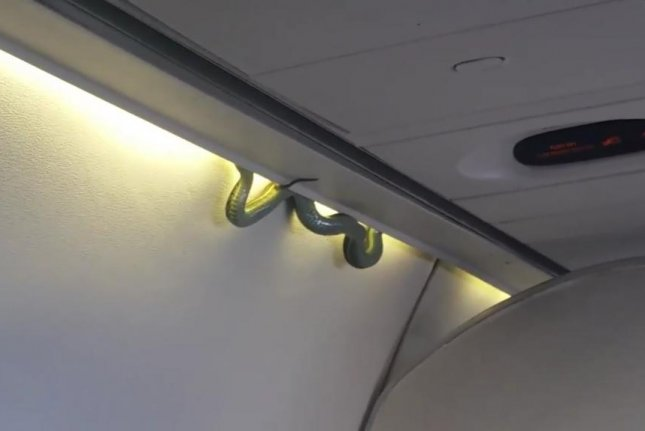 A snake slithers out of an overhead baggage compartment on an Aeromexico flight. Screenshot: Inda_medina/Twitter