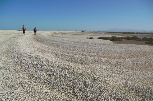 The millions of dead clams piled along the terminus of the Colorado River delta are a reminder of the CO2-emitting activities upstream -- activities which have turned the river delta from wetlands into desert. Photo by Jansen Smith/Cornell