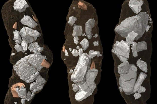 Scientists used advanced imaging to render the structures inside the fossilized archosaur droppings in three dimensions. Photo by Martin Qvarnström/Uppsala University