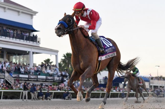 Mucho Gusto breezes to victory in Saturday's $3 million Grade I Pegasus World Cup Invitational at Gulfstream Park and could be headed for $20 million Saudi Cup. Photo courtesy of Gulfstream Park