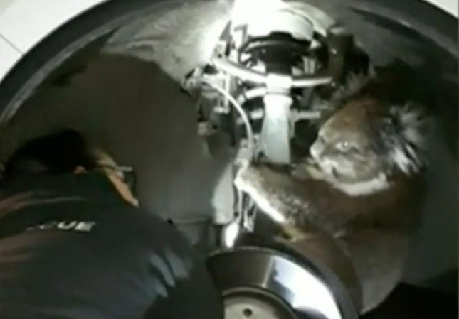 Koala survives 16km road trip in wheel arch