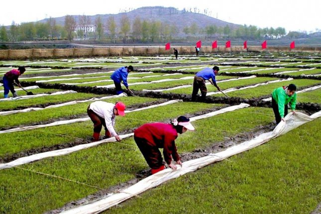 North Korea has recently issued multiple claims the food situation in the country is showing signs of improvement. EPA/KCNA