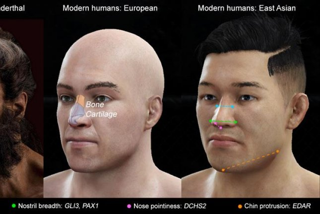 Scientists believe nose shape evolution in different human populations was influenced by climate and environment. Photo by UCL