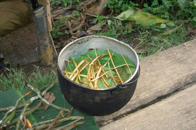 Ayahuasca is a tea or brew made from vines and leaves of the Amazon rainforest including the psychoactive component dimethyltryptamine. Photo byTerpsichore/Wikimedia Commons