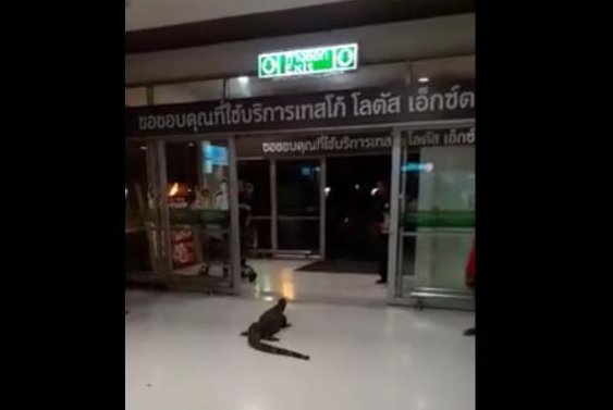 A giant monitor lizard welcomes shoppers to a Tesco Lotus store in Thailand. Screenshot: Ipsy Ipsy/Facebook