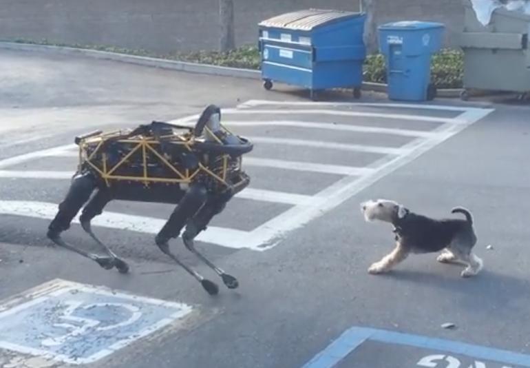 Dog faces off against Boston Dynamics' 'Spot' robot