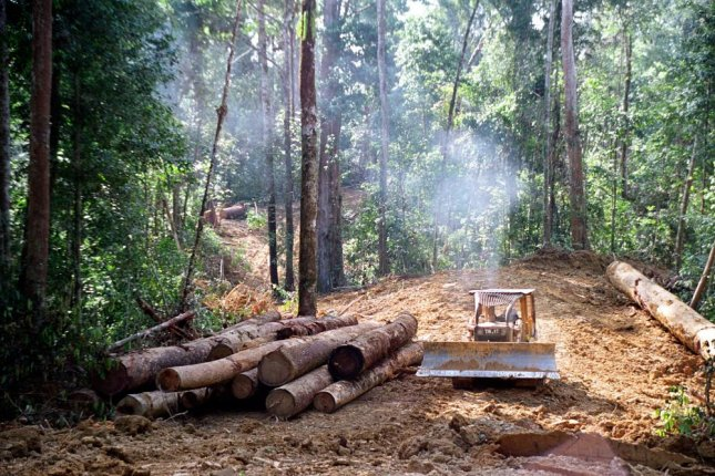 Heavily logged tropical forests may never recover