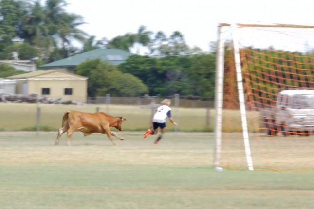 An escaped bull chases a player at a youth soccer game in Australia. Screenshot: JukinMedia
