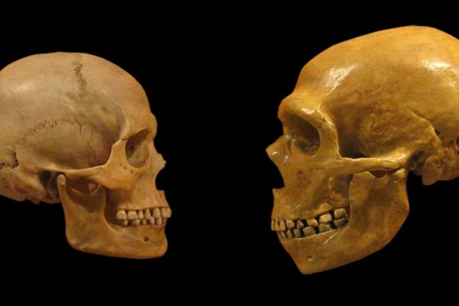 Several hundred thousands years before humans and Neanderthals interbred, another pair of hominin populations interbred -- the earliest instance of hominin interbreeding yet discovered. Photo by Wikimedia Commons