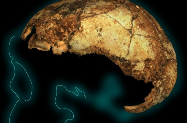 Scientists unearthed the world's oldest Homo erectus cranium in South Africa. Photo by Angeline Leece