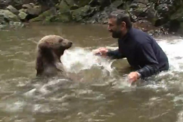 A man plays with a bear in a stream near a waterfall. JukinMedia video screenshot