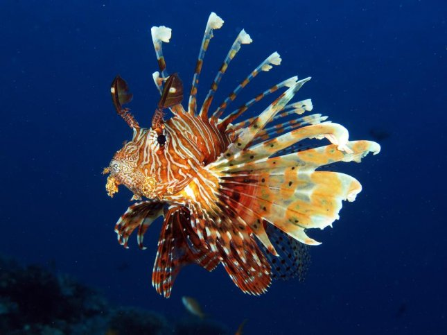 Whole Foods stores in Florida will begin selling lionfish for $8.99 per pound. The invasive species have posed a threat to the state's local reefs due to their high rate of reproduction and lack of natural predators. 