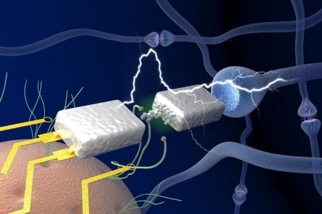 Engineers have produced a neuromorphic memristor, a transistor made of protein nanowires, capable of electric efficiencies similar to those achieved by the brain's neurons. Photo by UMass Amherst/Yao lab