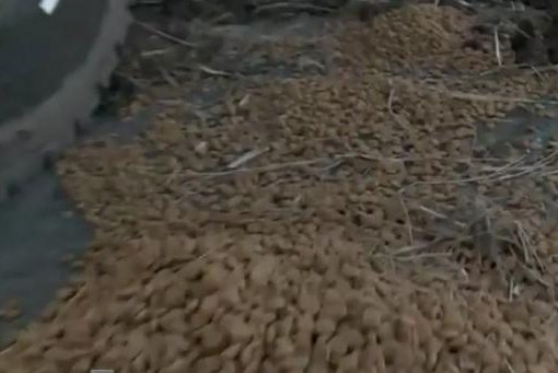 Dog food spills onto Indiana highway after semi crash