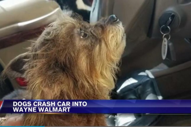 This dog crashes its owner's car into a Walmart in Wayne, W.Va. Screenshot: WSAZ-TV