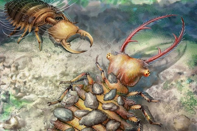 amber fossils illuminate early antlion evolution upi com