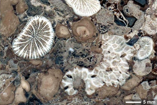 Coral-algae partnership is more than 210 million years old