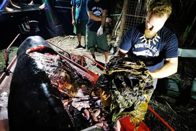 88lbs of plastic bags found in whale's stomach