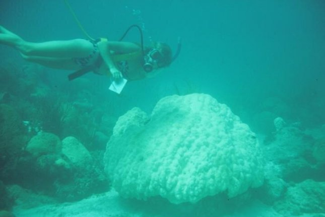 Researchers have been documenting declining coral health at Looe Key in the lower Florida Keys for three decades. Photo by Brian Lapointe/Florida Atlantic University's Harbor Branch Oceanographic Institute