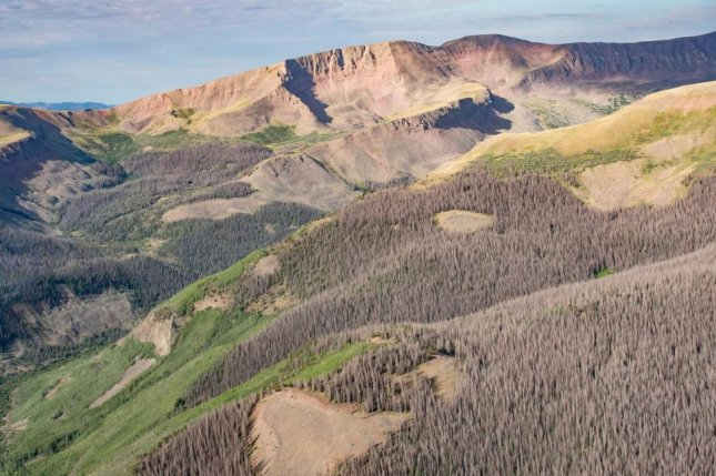 This is a hillside of dead pines killed by bark beetles in Colorado's San Juan Mountains. Photo courtesy of the Colorado State Forest Service.