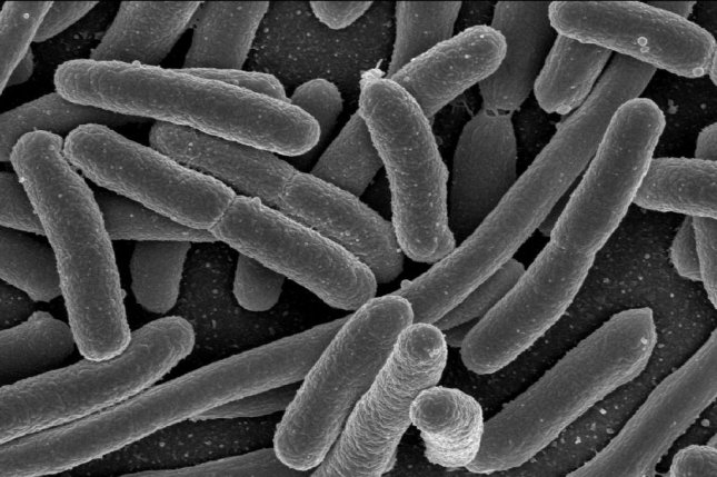 The study of our ancestors' microbiota could offer scientists new insights into the nature of human evolution. Photo by NIH