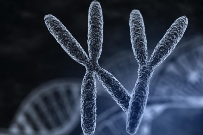 Embryos can use the DNA of an ancient virus to alter expression of the X chromosome genome, affecting sex ratios of developing babies. Photo by Tatiana Shepeleva/Shutterstock