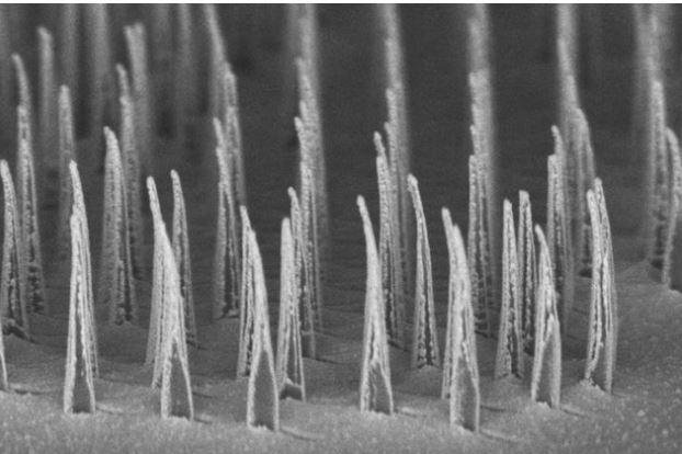 This image shows nanospears before being released for delivery of genetic information to cells. Photo courtesy of UCLA Broad Stem Cell Research Center/ACS Nano