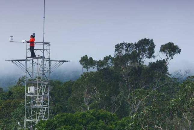 The measuring tower of the AmazonFACE project is seen rising above the Brazilian rainforest. Photo by AmazonFACE/Technical University of Munich