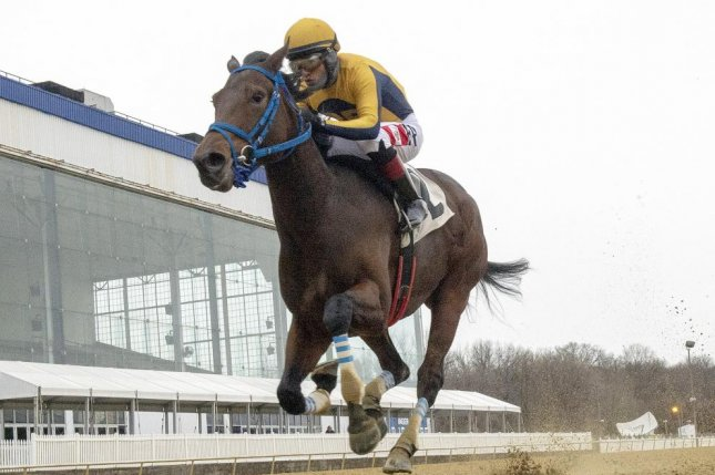 Late Night Pow Wow strolls to her eighth straight win Saturday at Laurel Park in Maryland and graded stakes are in her future. Photo courtesy of Laurel Park