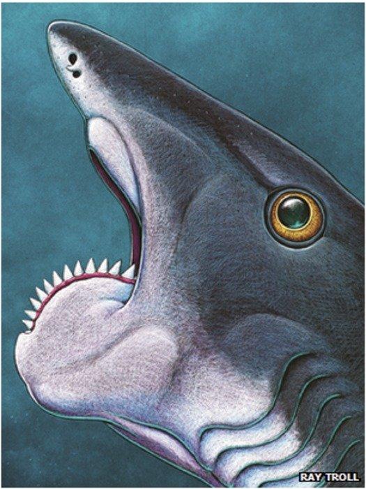 Ancient shark-like fish had teeth like a circular saw blade
