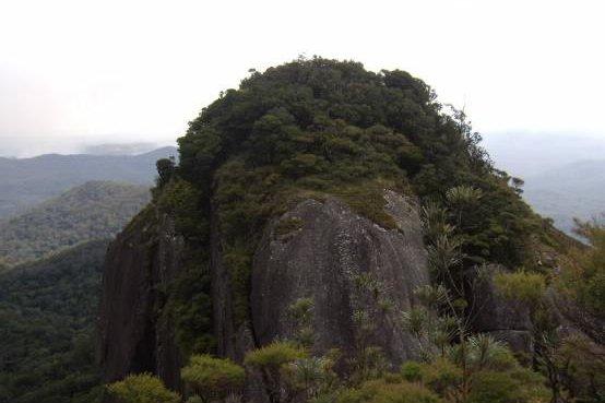 Kaphalim rock hosts a cloud forest in Australia's Dinden National Park. Photo by Marcia Goetze/JCU