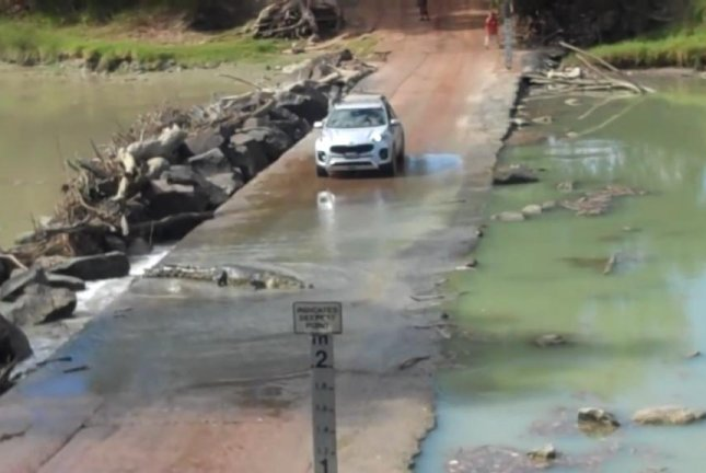 A car load of tourists wait while a crocodile crosses the bridge in front of them. Screenshot: Newsflare